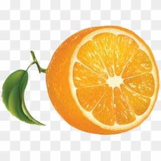 23+ Oranges Cartoon Transparent Images
