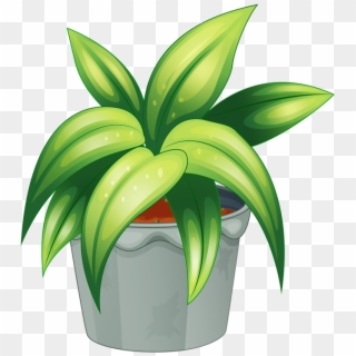 Free Flower Plants Png Transparent Images - PikPng on green house plants, purple house plants, blue house plants, lavender house plants, tropical house plants, moss house plants, orange house plants, evergreen house plants, easy to take care of house plants, cacti house plants, flowers house plants, dead house plants, perfect house plants,