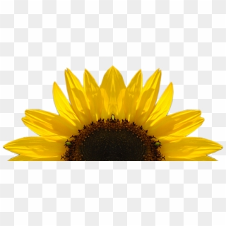 Free Sunflower Clipart Png Transparent Images - PikPng (320 x 320 Pixel)