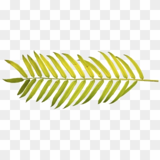 Free Tropical Leaves Png Png Transparent Images Pikpng Tropical leaves illustrations and clipart (173,135). tropical leaves png png transparent