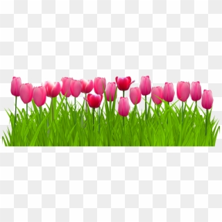 Free Tulip Png Png Transparent Images Page 2 Pikpng