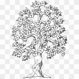 Spring Tree Coloring Page Primavera Desenho Png Clipart 5684971 Pikpng