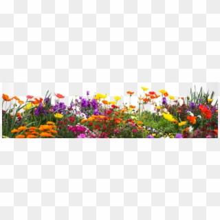 Free Flower Garden Png Png Transparent Images Pikpng